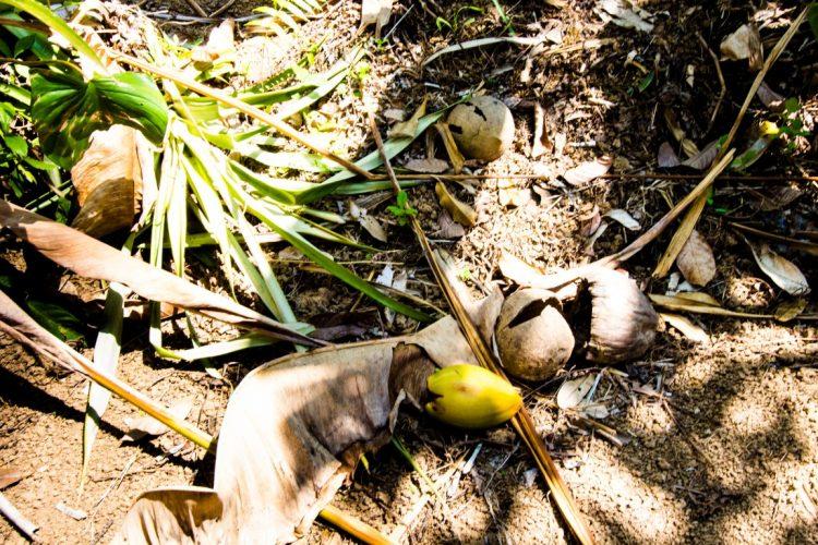 Exotische-Früchte-in-Thailand-18-Sorten-die-man-probieren-muss-21