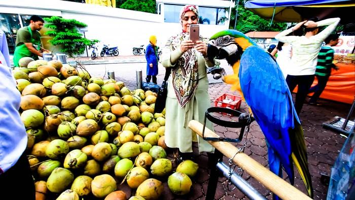 Kokosnuss-Exotische-Früchte-in-Thailand-18-Sorten-die-man-probieren-muss-62