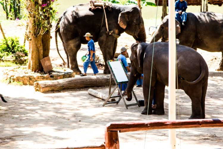 Thai-Elephant-Conservation-Center-Lampang-Elefantendorf-Thailand-01