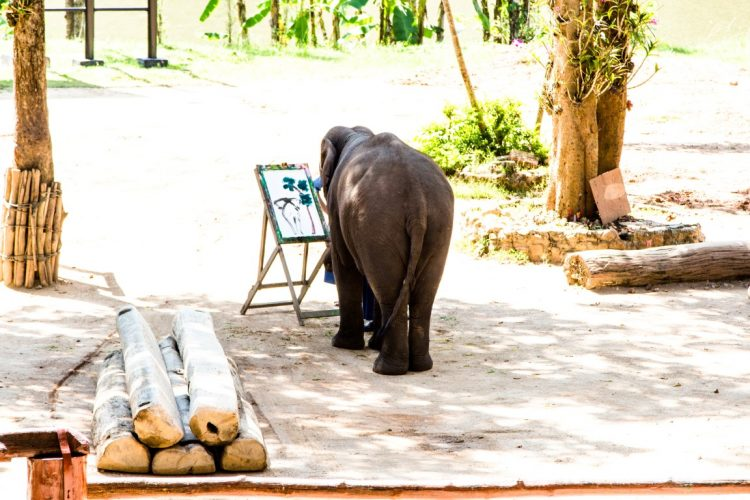 Thai-Elephant-Conservation-Center-Lampang-Elefantendorf-Thailand-02