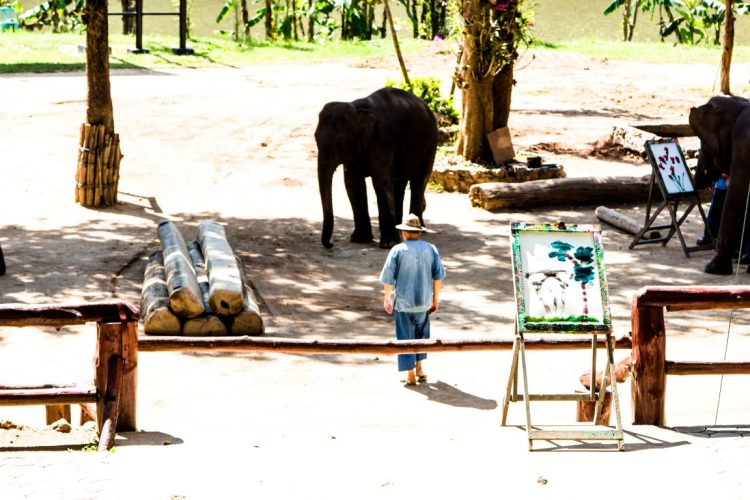 Thai-Elephant-Conservation-Center-Lampang-Elefantendorf-Thailand-04