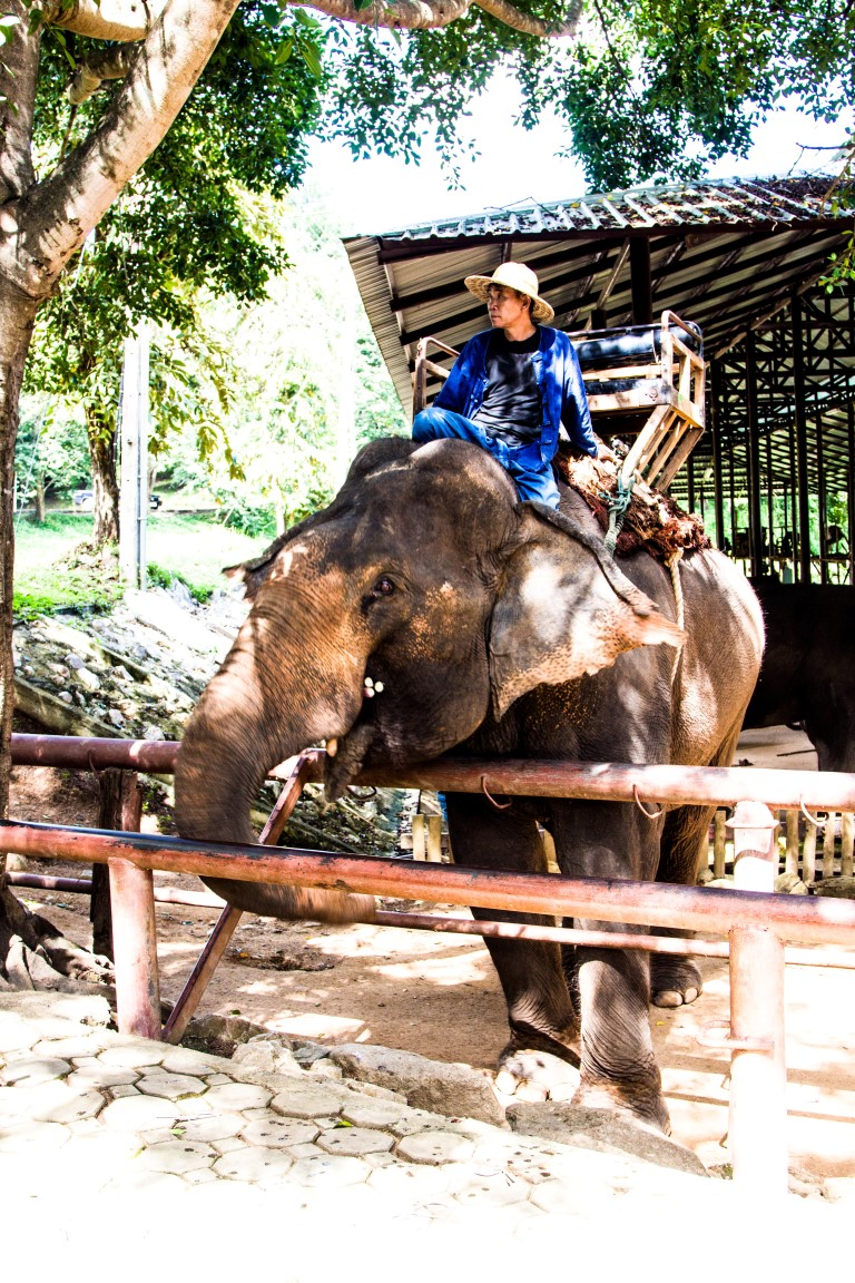 Thai-Elephant-Conservation-Center-Lampang-Elefantendorf-Thailand-27