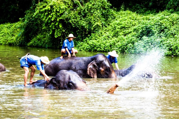 Thai-Elephant-Conservation-Center-Lampang-Elefantendorf-Thailand-37