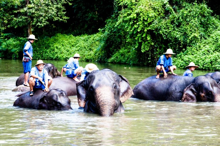 Thai-Elephant-Conservation-Center-Lampang-Elefantendorf-Thailand-38