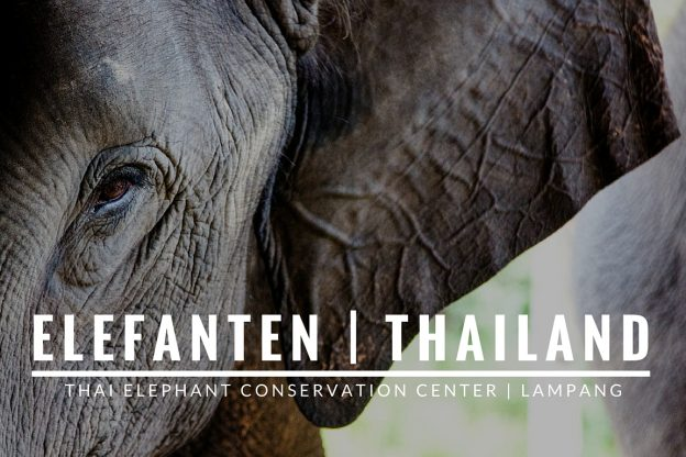 Elefanten in Thailand | Thai Elephant Conservation Center, Lampang.